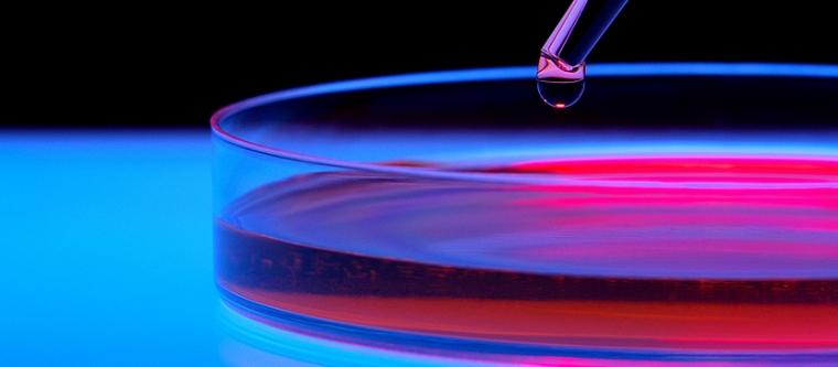 Apoyo a la creación y consolidación de bioempresas