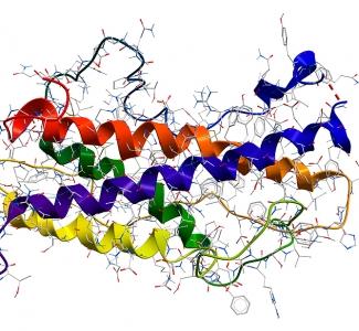 La somatostatina y sus receptores como ejemplo de convergencia entre hormonas, cáncer y neuro-degeneración.