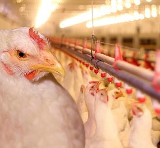 Industrialización y comercialización de los alimentos. Su impacto en salmonelosis, campylobacteriosis, yersiniosis