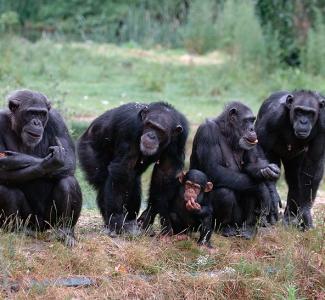 Enfermedades zoonóticas emergentes en poblaciones animales. Necesidad de una gestión integrada